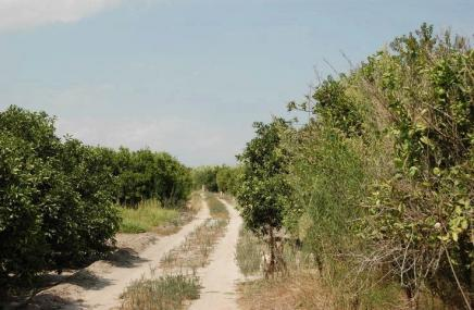 Plot in Pego for sale